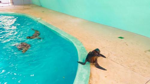 Squalus Sea Lion